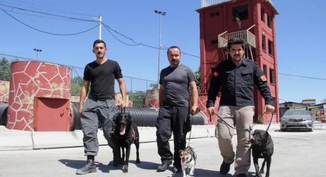 Ankara İtfaiyesi K-9 Arama Kurtarma Timi'nin özenle eğittiği 'Dora', 'Leon' ve 'Boomer' adlı köpekler, cihazlarının yetersiz kaldığı doğal afetler ve göçük olaylarında, enkaz altında mahsur kalan hayatların imdadına yetişiyor. Hayat kurtaran köpeklerin kendi hayat hikâyeleri de bir hayli ilgi çekici