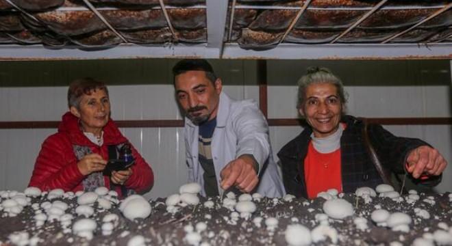 Günümüzde çok sayıda vatandaşın geçim kaynağı olan ve büyük ilgi gören mantar yetiştiriciliği, Yenimahalle Belediyesi Meslek Edindirme ve Hobi Kursları'nda (YENİMEK) ders olarak veriliyor.