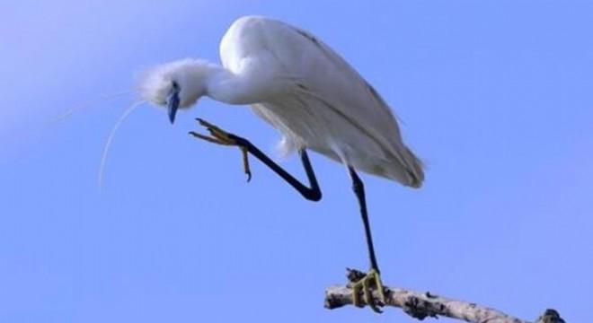 Nallıhan Kuş Cenneti, yarın ve pazar günü altıncısı düzenlenen foto safariye ev sahipliği yapacak.