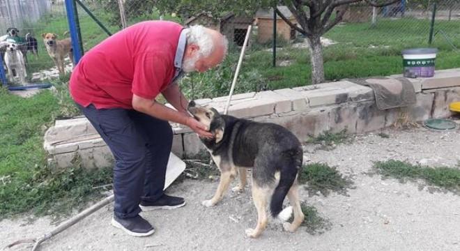 Sokak köpeklerinin can dostu