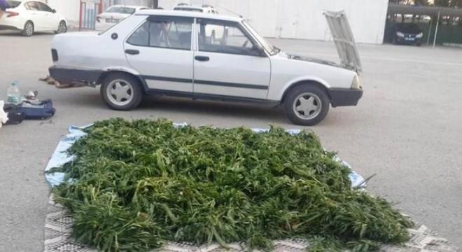Uyuşturucu çiftliği