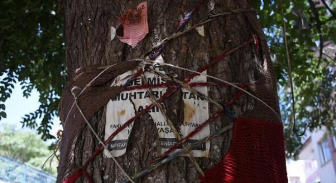 Zımba, raptiye ve çivi gibi delici araçlarla 'korsan el ilanları' asılan ağaçların gövdeleri adeta metal yığınına dönüyor. Ağaçlara korsan ilan asılmakla kalmayıp; taksi çağırma butonları, borular, aydınlatma ışıkları dahi monte ediliyor.